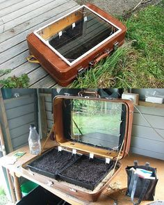 An old suitcase makes a great little cold frame...