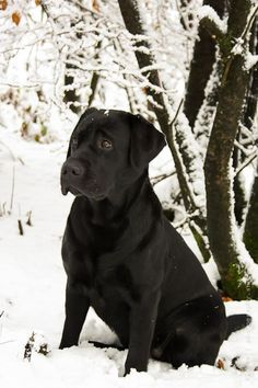 I am bringing my Max to the snow this weekend! *Baby...it's cold outside!!*