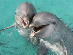 Photo: Dolphins call each other by name / Eco/UIG/Getty Images Cute Baby Animals, Animals And Pets, Funny Animals, Baby Dolphins, Bottlenose Dolphin, Water Animals, Cute Animal Videos, Animal Facts, Ocean Creatures