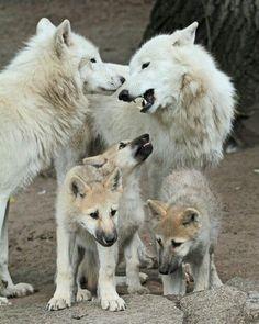 wolfsheart-blog:  Family