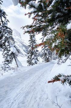 Winter Wonderland.  Lake Louise, Banff National Park