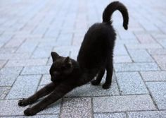 Downward-facing Cat