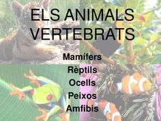 Els animals vertebrats by blogsbetaniacm via slideshare