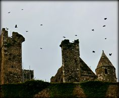 Crows of Cashel - Jon Lander ©2016 - at the Rock of Cashel ruins in County Tipperary, Ireland. I love crows but apparently in Irish history/mythology they picked at the bodies of the war dead and have some unpopular associations.