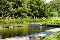 Beneath the sleek design of the Native Plant Garden is a thriving wetland habitat.