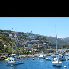 Catalina island, I've been there once. It was cool for the first day or so and I never have any desire to go there again
