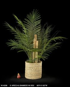 Purify the air with Treemasters 5 ft. Areca & Bamboo. $259.00 from Carolina Rustica.
