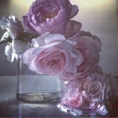 """5,103 Likes, 81 Comments - Nick Knight (@nick_knight) on Instagram: """"Roses from my garden"""""""