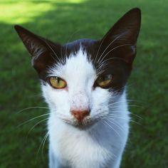 Stray cat @monumen tugu pahlawan