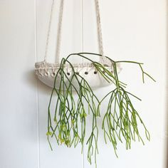 Cloud Planter pottery hanging planter by MyVeryOwnEyeGoggles