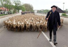 Celebrations take place for a new grazing season in Hortobagy, Hungary, on April 26. Racka sheep!