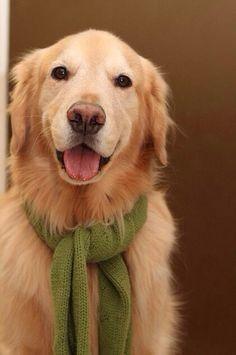 got my scarf ... now I'm set!