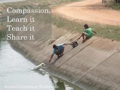 compassion quotes   Tumblr