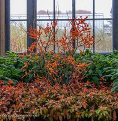 Wordless Wednesday    Longwood Gardens Conservatories