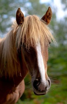 New Forest Ponies   Flickr - Photo Sharing!