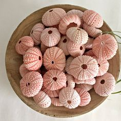 "Sale! Set of 12 pink  Sea Urchins (Size: 1"" to 1.75""). Beach Wedding Decor - DIY projects- Air Plant Shell magnets- supplies"