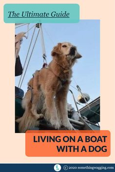 How do you get the dog off the boat? Which boat should you choose? Where can you cruise with a dog? Here's EVERYTHING you need to know about living on a boat and cruising with your dog. Sailboat Living, Living On A Boat, Dogs On Boats, Buy A Boat, Best Boats, Dog Anxiety, Kinds Of Dogs, Dinghy, Training Your Dog