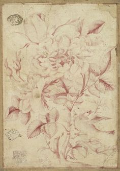 Rose And Nightingale