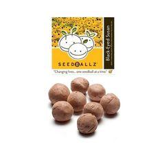 Seedballz Black-Eyed Susan - 8 Pack - Domestic Good