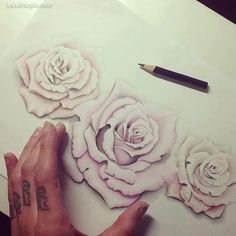 Drawing roses flowers art tattoo roses hand - really nice roses