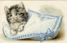 *The Graphics Fairy LLC*: Vintage Clip Art - Adorable Cats - Kittens  http://graphicsfairy.blogspot.ca/2011/11/vintage-clip-art-adorable-cats-kittens.html#