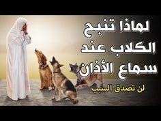 لماذا تنبح الكلاب وتصرخ عند سماع الاذان وهل يرى الكلب الجن ومـ ـوت الإنسان إجابة ستصدمك Youtube In 2021 Bunion Remedies Youtube Remedies