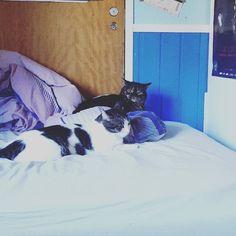 Someone's not happy  . . . #viiruthecat #kasperithecat #catsofinstagram #cats #instacat #dorks