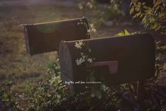 Mailboxes Fine Art Photography, Mail Postal Box Photo, White Jasmine, Green Leaves Warm Earthy Home Decor Wall Art, Rustic Neutral Landscape by laughlovephoto on Etsy