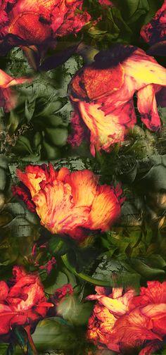 "Estampa ""Sinhá Vitória"" - Carol Arbex Inverno 2015 l ""Sinhá Vitória"" Pattern - Carol Arbex Fall 2015"