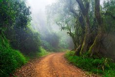 Landscape photo of a dirt road in a lush afromontane forest