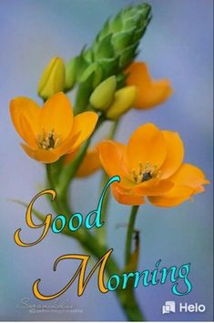 Hugs And Kisses Quotes, Good Morning Photos, Blue Orchids, Beautiful Morning, Morning Greeting, Blooming Flowers, Birthday Greetings, Morning Quotes, Mornings