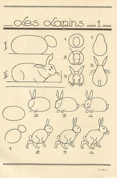 how to draw...bunnies