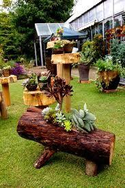 ABC Succulents: Tree Trunk succulent gardens
