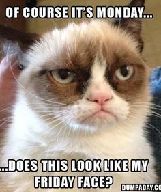 Grumpy cat by winifred