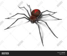 aranha viuva negra - Pesquisa Google