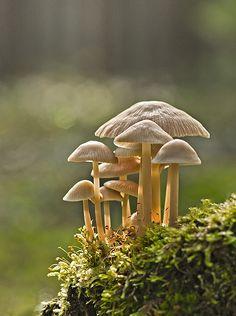 W Lesie. #mushroom #toadstool #fungus