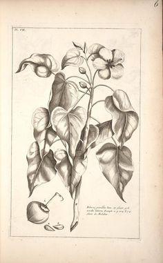 1775-78 - Histoire universelle du règne végétal, ou nouveau dictionnaire physique et economique de toutes les plantes qui croissent sur la surface du globe.  By Pierre-Joseph Buc'hoz