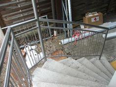 Nirogeländer gebogen Stairs, Steel, Home Decor, Pictures, Stairway, Decoration Home, Room Decor, Staircases, Home Interior Design