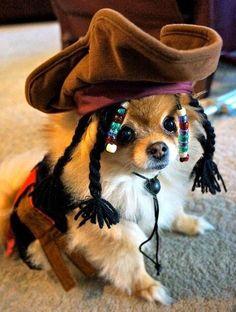 Pirate Pom! So cute!