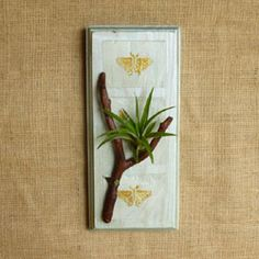 Support cadre plante a rienne tillandsia fille de l 39 air for Plante fille de l air