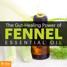 Fennel essential oil - Dr. Axe