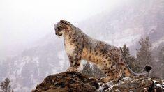 Интересные факты о самом скрытном звере « FotoRelax