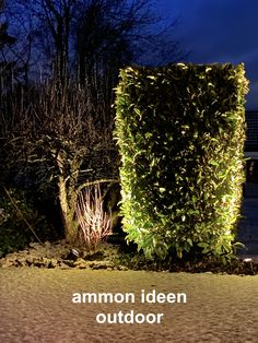 immer schön, Ideen by ammon ideen Outdoor Lighting, Culture, Create, Plants, Projects, Nice Asses, Exterior Lighting, Planters, Plant