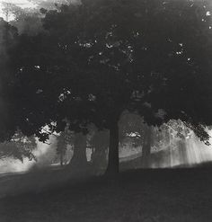 """Olive Cotton (Aus., 1911-2003) [+] Smoke Through The         Trees, c1940/1990. Silver gelatin photograph, titled, dated """"c1940"""",         editioned 1/10 and signed in pencil in lower margin, 32.5 x 30.7cm.  link"""
