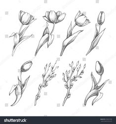 Set Of Spring Flowers Tulips Branches. Pencil Sketch Collection Vector Illustration – 259657598 : Shutterstock Set Of Spring Flowers Tulips Branches. Tulip Drawing, Tulip Painting, Leg Tattoos, Flower Tattoos, Tattos, Purple Tulips, White Flowers, Flower Sketches, Future Tattoos