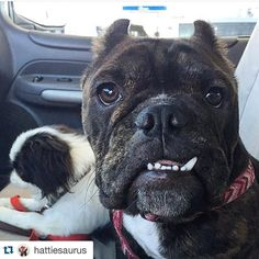 PLEASE READ !! If you ever wanted to help someone who truly deserves it here's your chance  @hattiesaurus with @repostapp.  Throw back to my freedom ride photo in the @roadogs bully mobile!! Unfortunately the bully mobile has crossed the rainbow bridge and now all Road Dogs rescues are stranded!!! Nikki and the rescues need YOUR help! If each friend/follower of mine donates just a few dollars each the rescues will be back on the road in no time! Please donate now and don't wait. Emergencies…