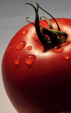 TOMATO - lat. Solanum lycopersicum, Group: Fruits and Vegetables - (Odor…