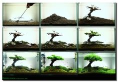 Aquascape Tree Step by Step by StarMeKitten