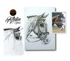horses , equestria