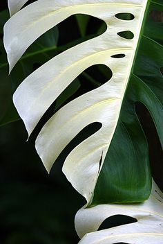♥ #leaf #green #nature